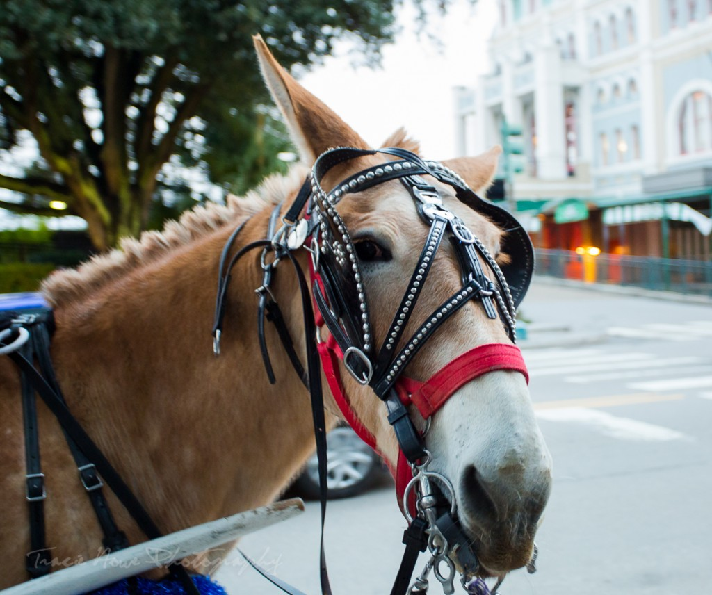 one day to visit New Orleans carriage ride