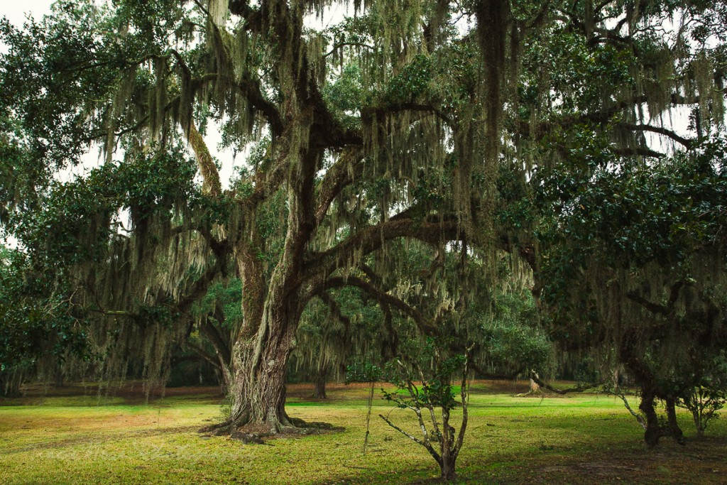 Avery Island photos