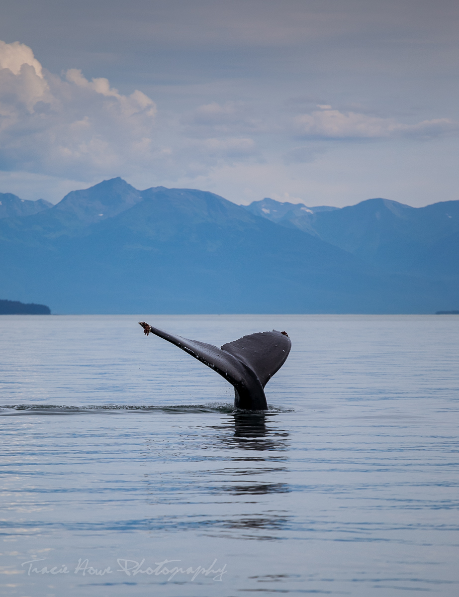Tinggly experiences - whale watching in Victoria B.C.