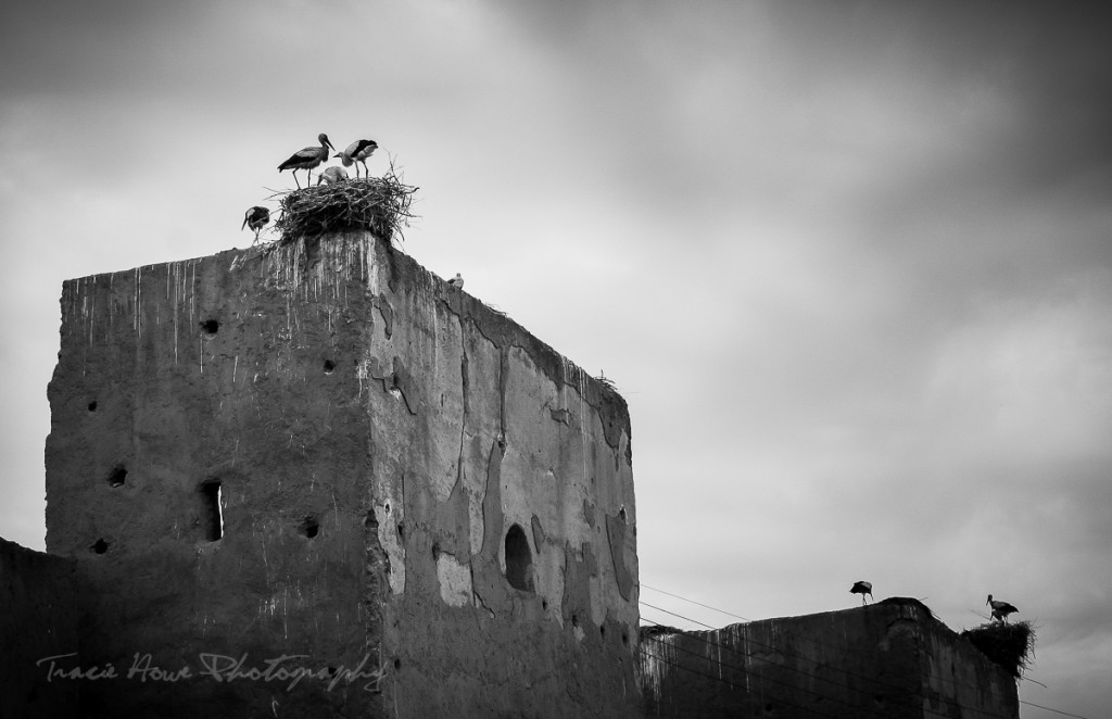 Morocco storks perspective