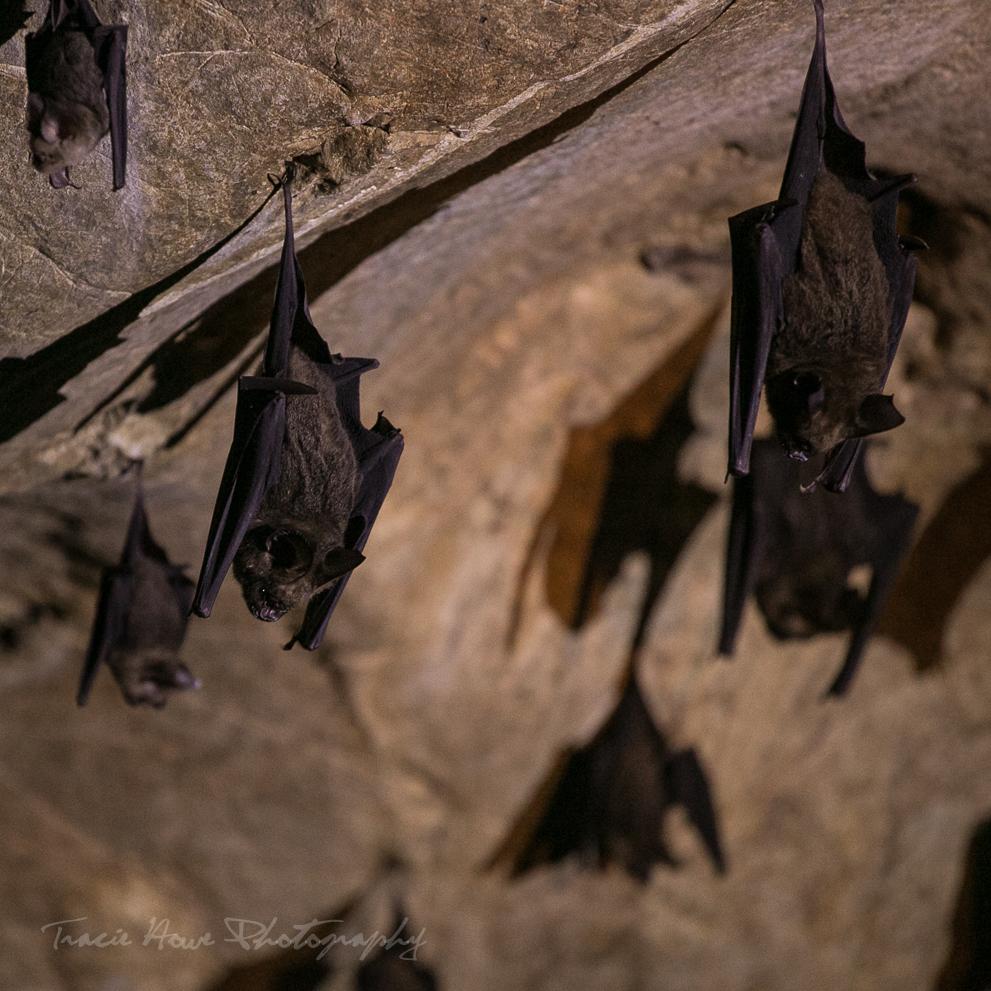 Langkawi Mangrove tour bat cave