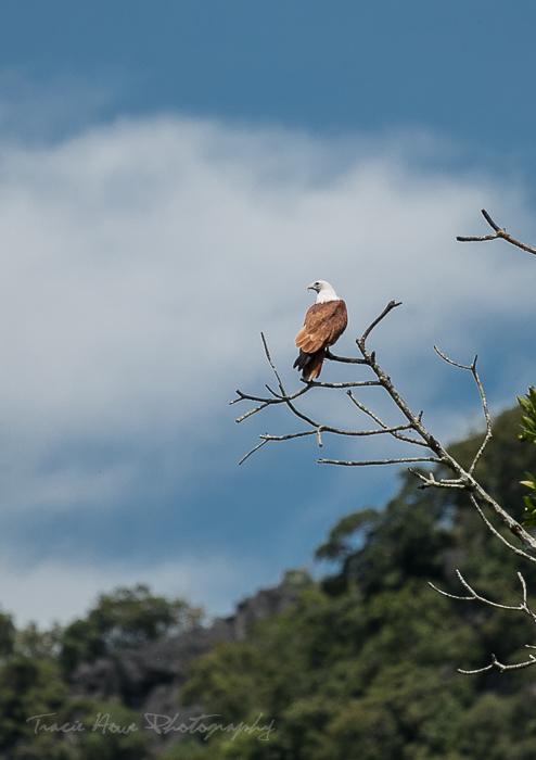 Langkawi wildlife mangrove tour
