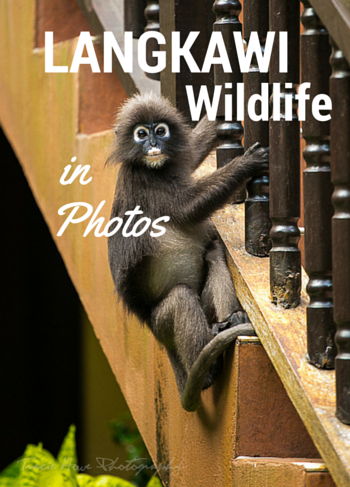 Langkawi wildlife in photos