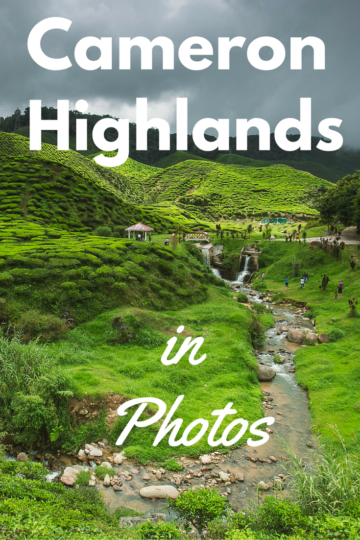 photos from Cameron Highlands in Malaysia