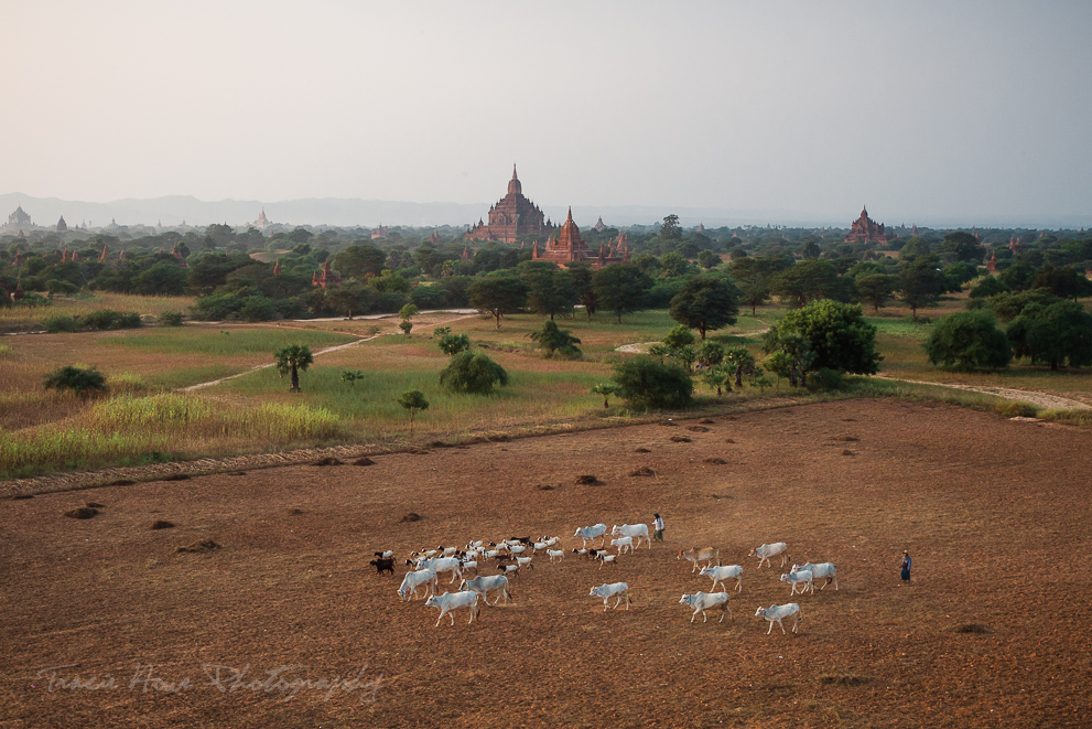 Bagan temple sunset photo