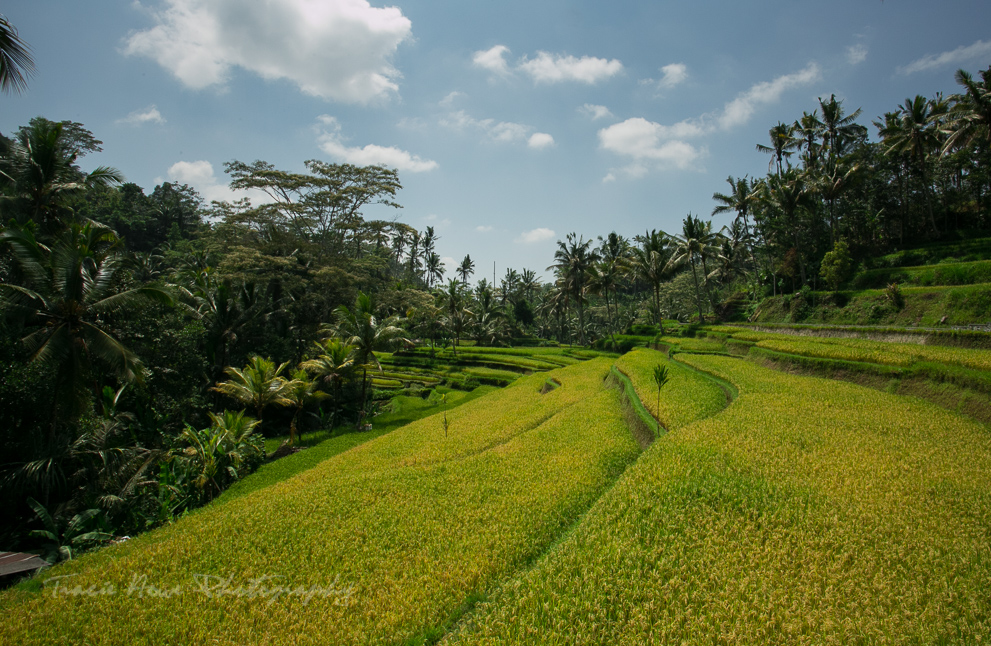 Bali itinerary highlights-4