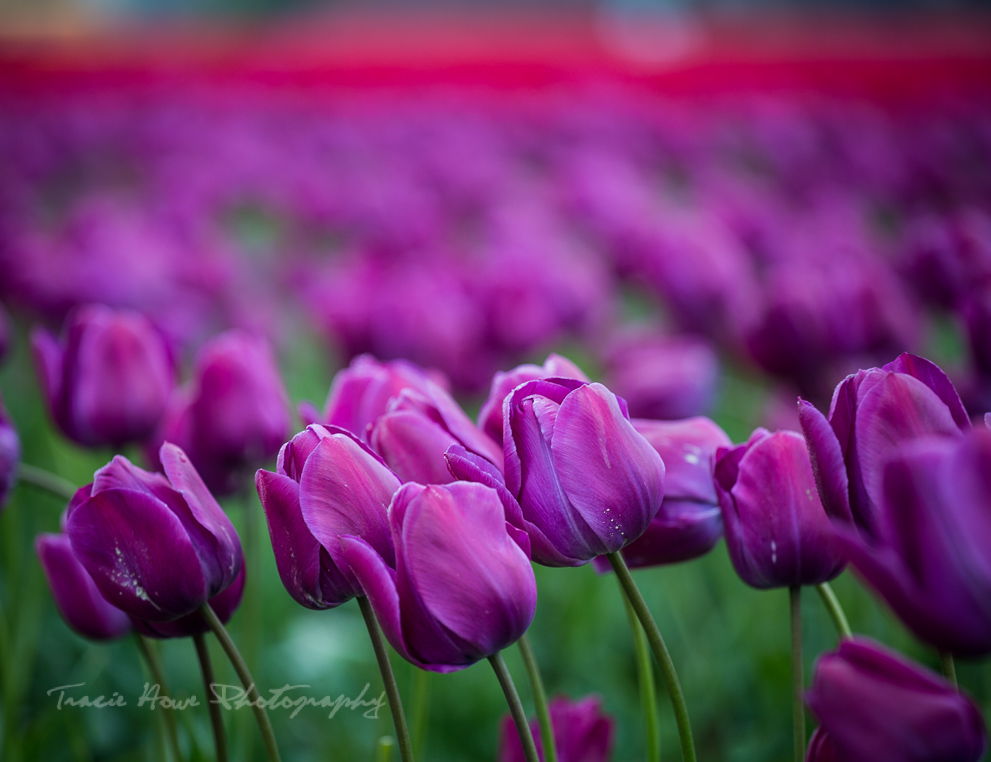 Example of shallow depth of field - non-technical photography tutorial | Tracie Travels