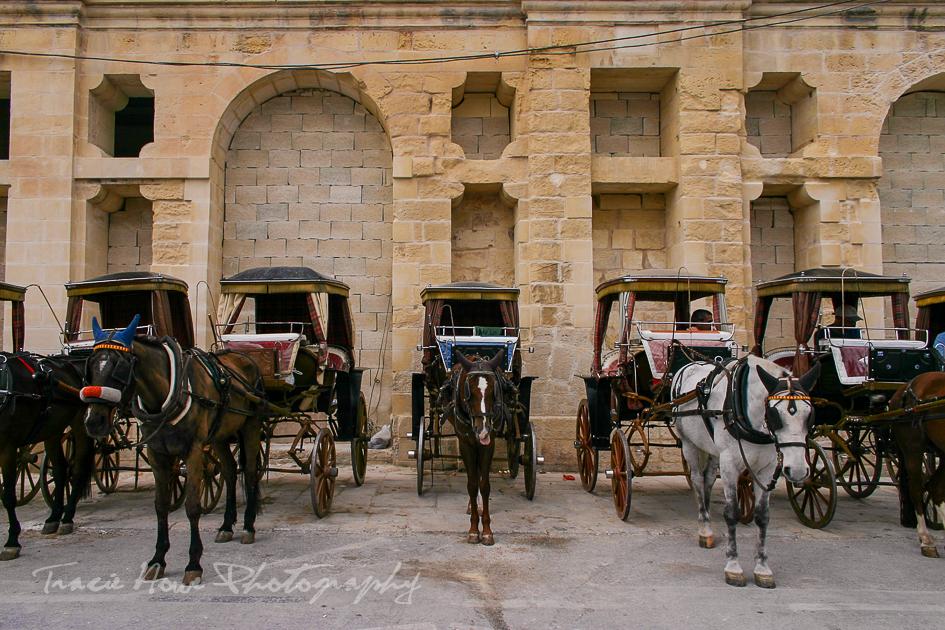 horses in Malta