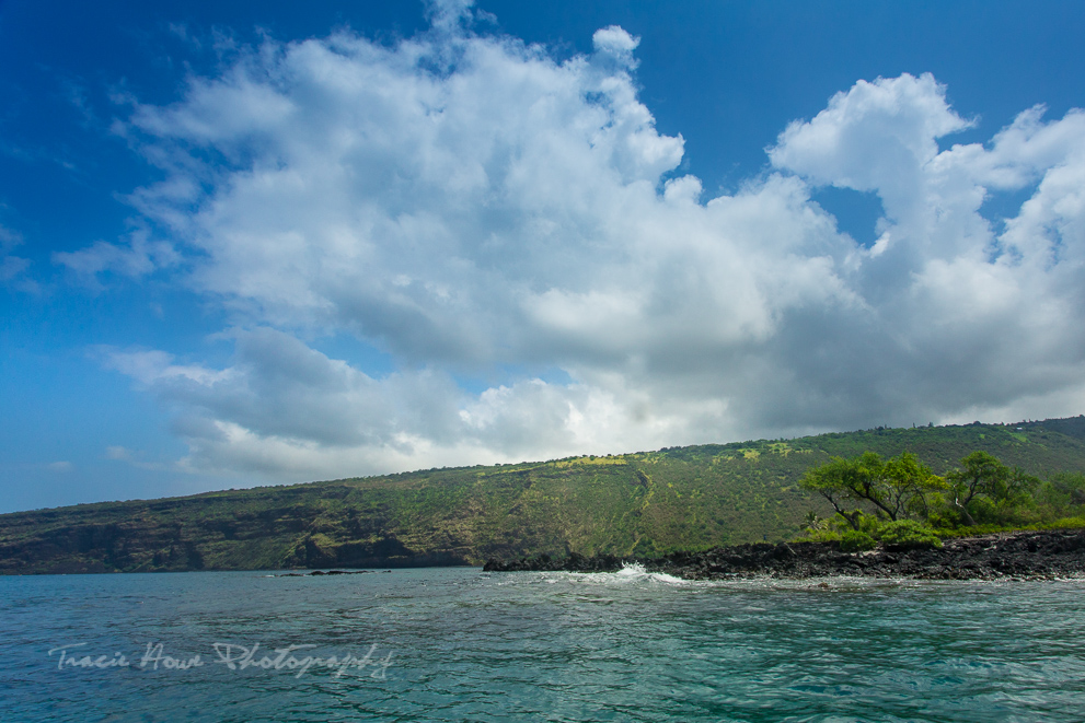 swimming with dolphins in Kealakekua Bay