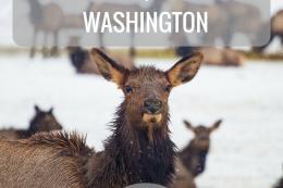 Weekend of winter fun Union Gap, WA - Day 2 | Tracie Travels