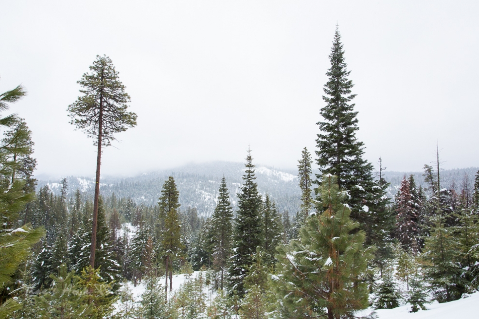 scenery while snowmobiling in Union Gap