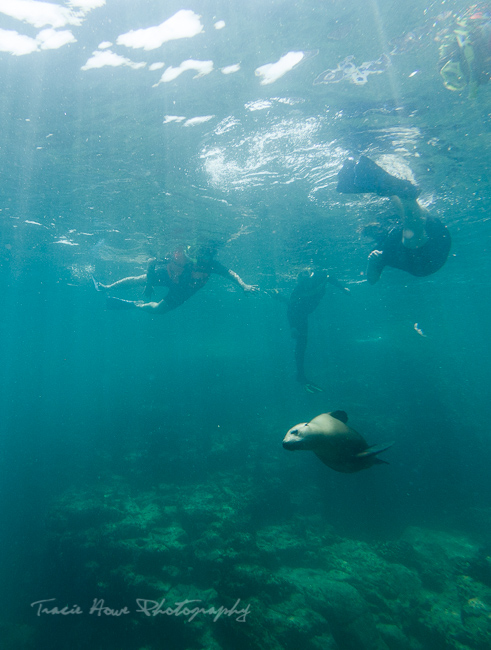 sea lion swim with Red Travel Mexico