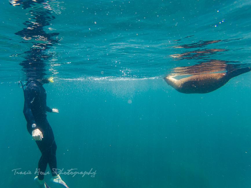 swimming with sea lions at Espíritu Santo Island