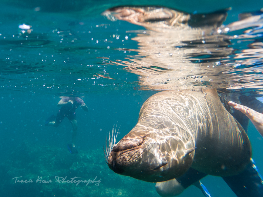 swimming with sea lions at Espíritu Santo Island