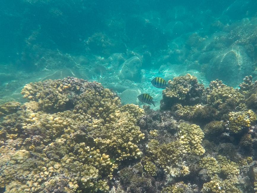 Espíritu Santo Island snorkel tour