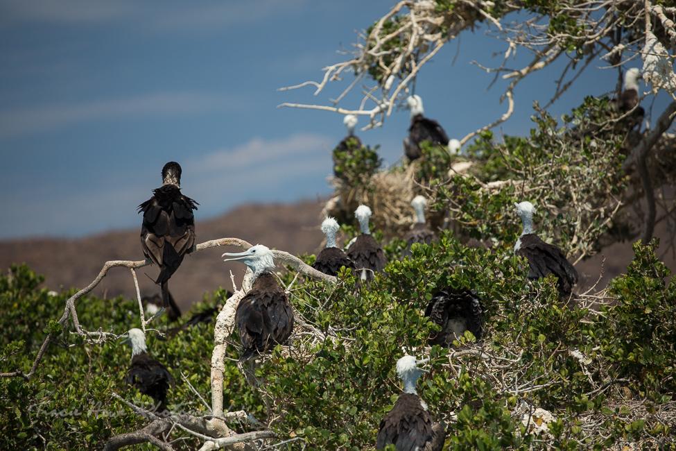 Espíritu Santo Island birds