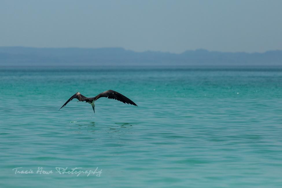 Espíritu Santo Island bird