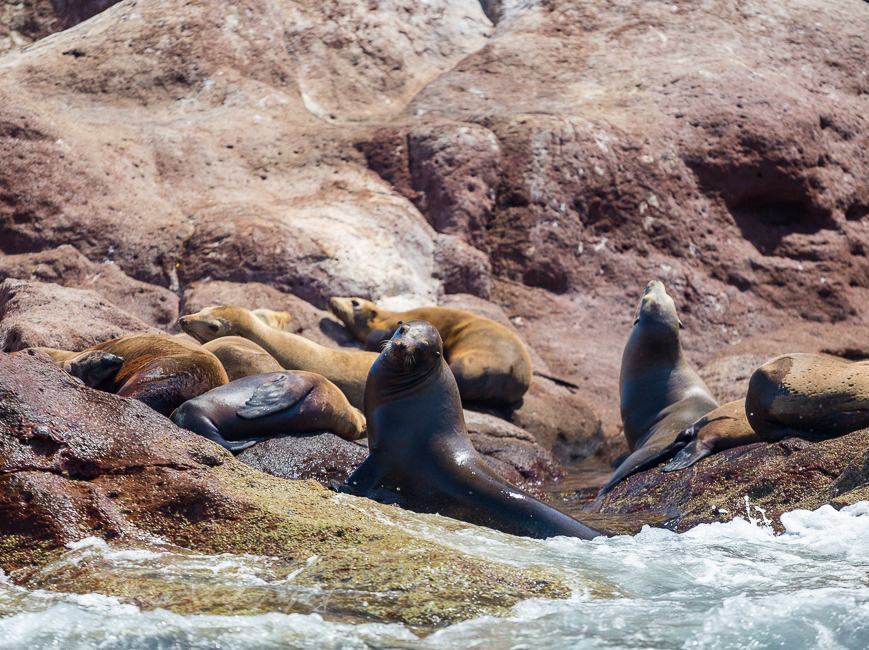 Red Travel Mexico sea lion tour