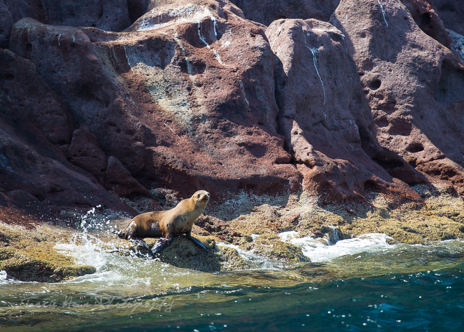 sea lions of Espíritu Santo Island