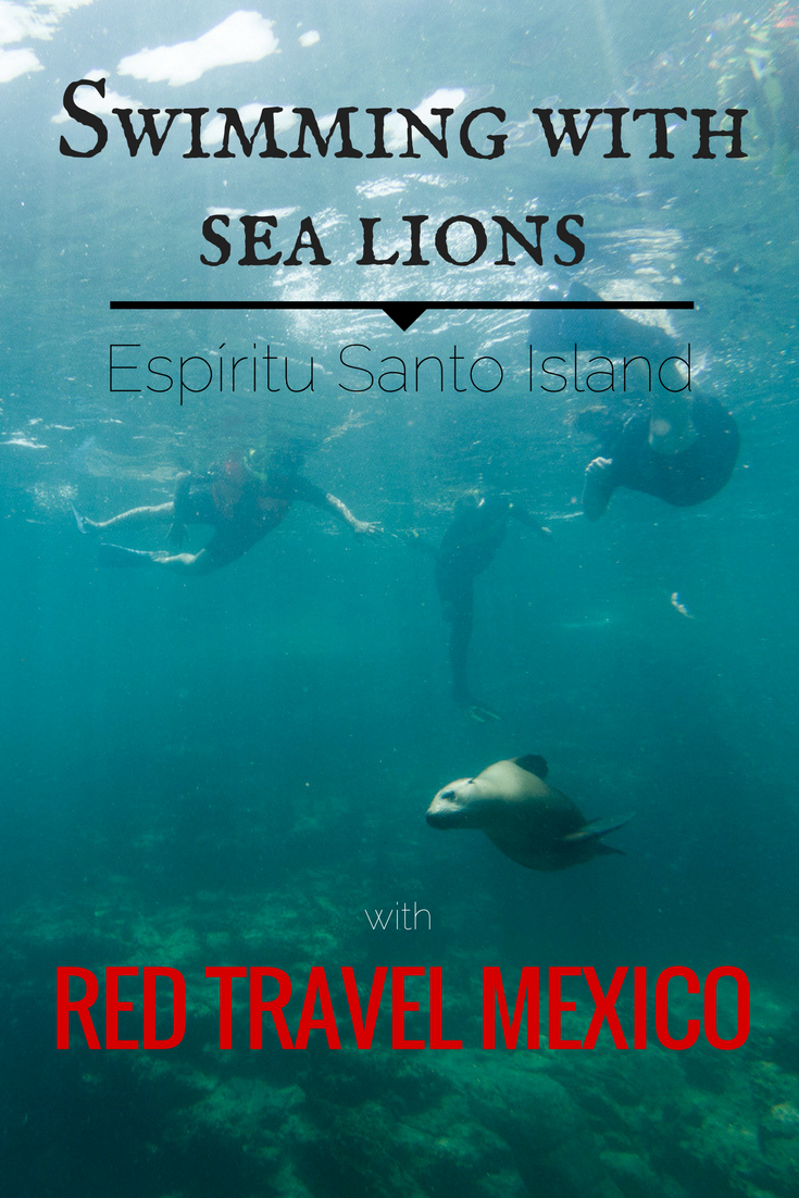 Swimming with the sea lions – Red Travel Mexico
