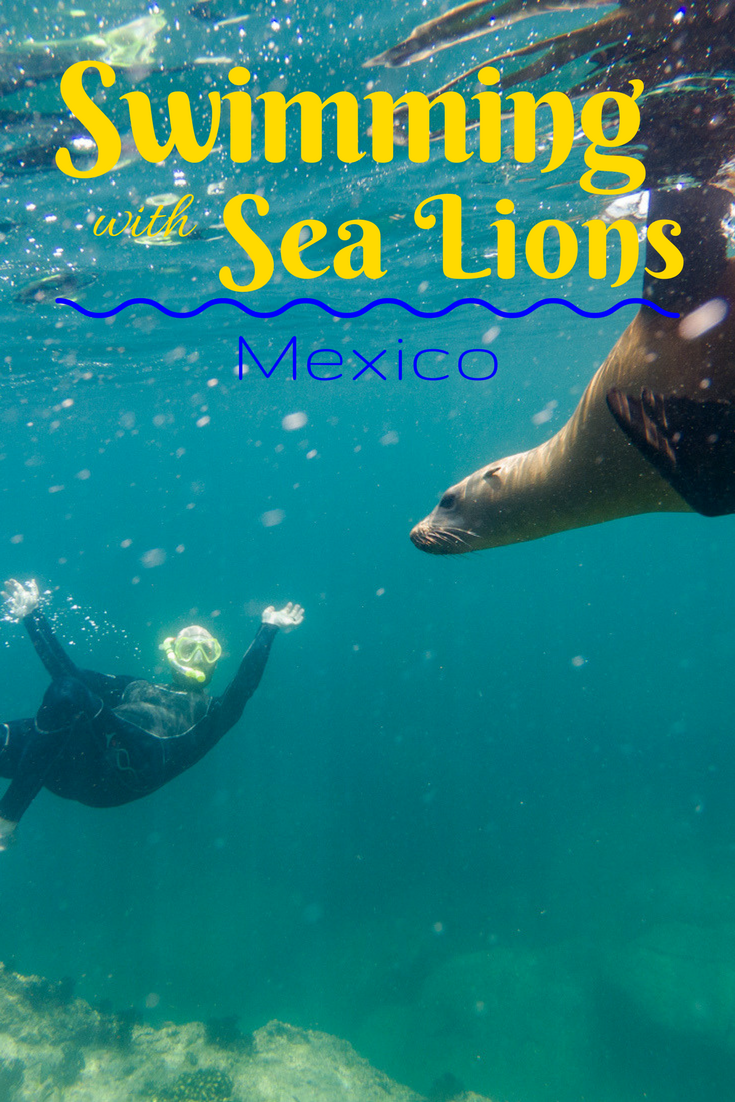 Swimming with the sea lions - Red Travel Mexico | Tracie Travels