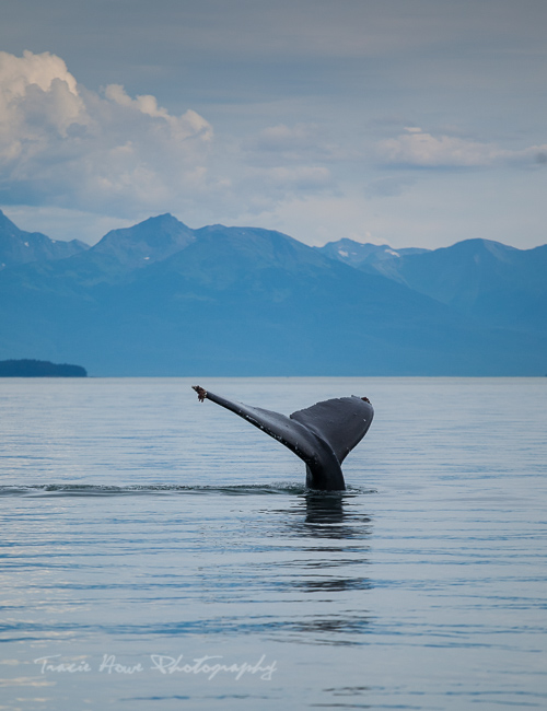 Juneau whale watching tour