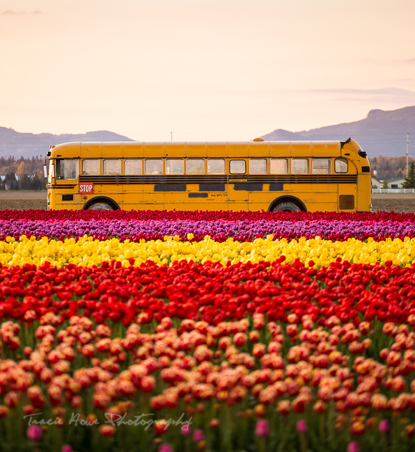 Skagit Valley Tulips bus