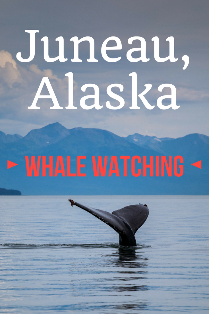 Whale Watching in Juneau, Alaska | Tracie Travels