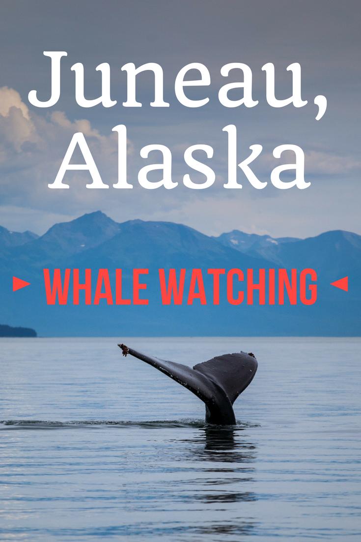 whale watching Juneau Alaska