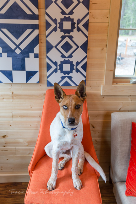 dog-friendly tiny house in Leavenworth, WA